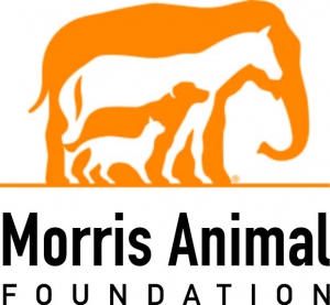 Morris Animal Foundation Announces 2017 Feline Research Grants
