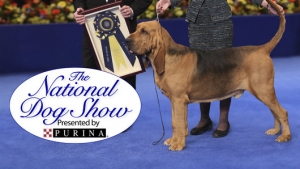 Tune in Saturday November 21, 2015 at 630pm EST when David Frei host of The National Dog Show watched by millions on Thanksgiving Day joins Jon and Talkin' Pets to discuss the upcoming event