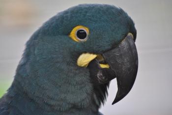 The IX Loro Parque Foundation Parrot Congress, a resounding success