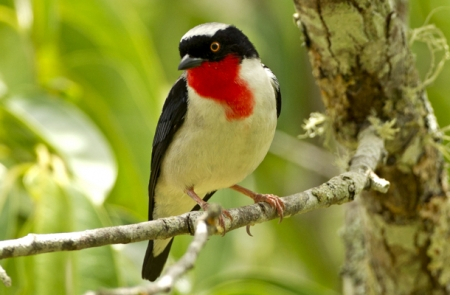 Good News for Brazilian Bird on the Brink
