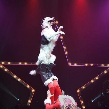 National Dog Trainer Sara Carson who placed 5th on America's Got Talent this year will join Jon and Talkin' Pets 12/23/17 at 630pm EST to discuss Hero and The Super Collies and her training methods