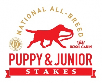 "WIRE FOX TERRIER ""PIERCE"" WINS AKC ROYAL CANIN  NATIONAL ALL-BREED PUPPY AND JUNIOR STAKES"