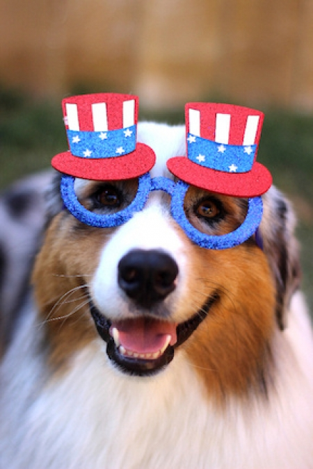Seven, the Official Puppy Party Candidate, Announces His Bid For  President of the United States at Rescuecon, Susan Hartzler and Seven will join Jon and Talkin' Pets at 630pm ET to discuss the election