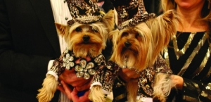 Jerry Grymek - Doggie Concierge at Hotel Pennsylvania for the Westminster Kennel Club Dog Show will join Jon and Talkin' Pets 11/15/14 at 7:10 PM EST to discuss the upcoming 2015 show