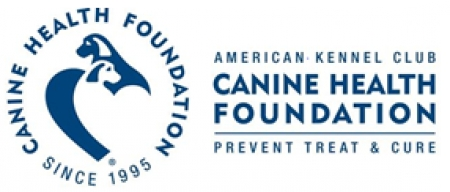 AKC Canine Health Foundation Awards First Research Grant Through the Comparative Brain Tumor Consortium with the National Cancer Institute