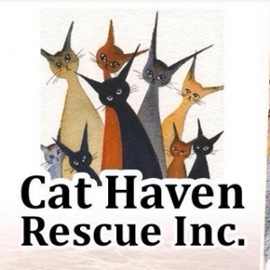 Cat Haven Rescue Inc. volunteer sets up GoFundMe to generate donations