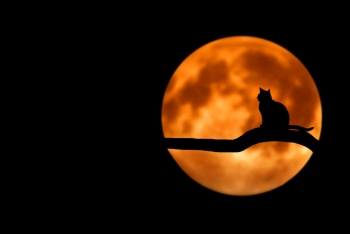 Keeping Halloween Fun (and Safe) for Your Pets:  Tips for Families with Animals