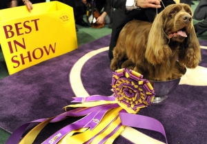 Age is just a Number: 3 Older Dogs who have won Westminster and Benefits to Training Yours