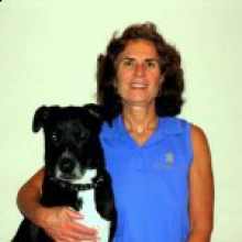 Dr. Katy Meyer - Tampa Bay Veterinary Emergency Service - Tampa, Florida