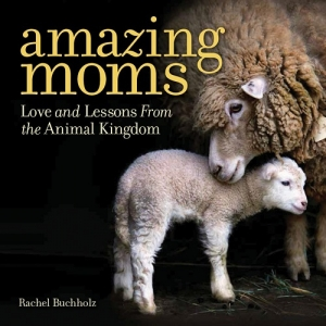 "David Mizejewski from the National Wildlife Federation will join Jon and Talkin' Pets 5/13/17 at 5pm EST to discuss NAT GEO WILD'S CELEBRATION OF MOTHER'S DAY AND THE AMAZING MOMS OF THE ANIMAL KINGDOM and give away's of the New book ""Amazing Moms"""