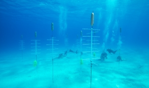 The Florida Aquarium Helps Create Underwater Coral Nursery in Cuba