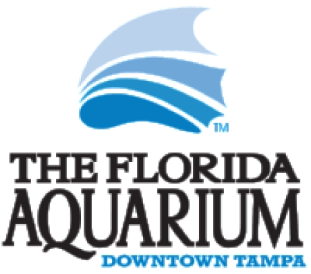 Tuesday: The Florida Aquarium to release eight cold stunned turtles from the northeast