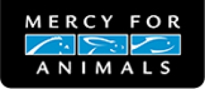 Mercy For Animals video regarding factory farm duck slaughter - viewer discretion advised