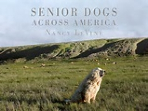"Nancy LeVine will join Jon and Talkin' Pets this Saturday 7/23/2016 live at 5 pm EST to discuss and give away her new book ""Senior Dogs Across America"""
