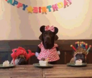 Celebrate Life Boost Coffee's Birthday