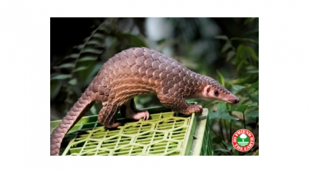 Paolo Bray Founder & Director of Friend of the Sea / Friend of the Earth & Director of International Programs for Dolphin-Safe project / Earth Island Institute will Join Jon & Talkin' Pets 4/18/20 at 5pm ET to discuss an upcoming Webinar / Pangolin